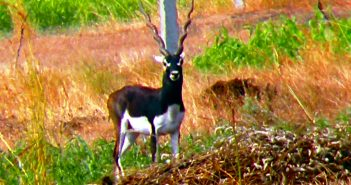 Naygaon Mayur Wildlife Sanctuary (Beed)