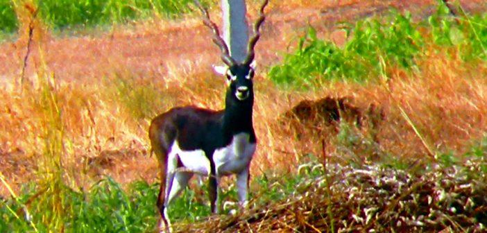 Naygaon Mayur Wildlife Sanctuary (Beed)