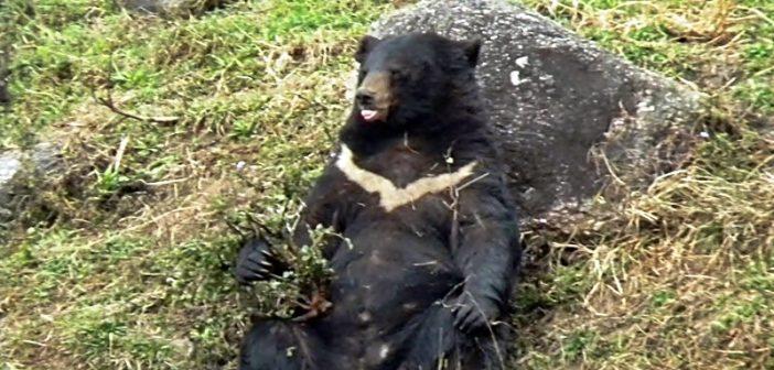 Gopalpur Zoo