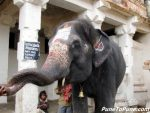 Temple Elephant's Blessings