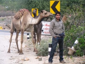 with Camels
